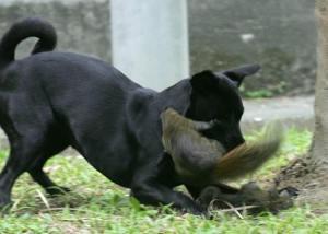 squirr5ez1