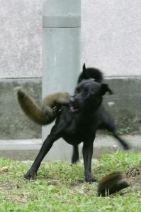 squirr6zr2